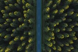 Strasse durch den Wald