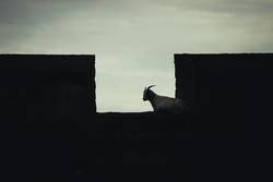 Ziege auf der Festungsmauer