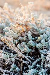 Schöne Pflanzen im Winter