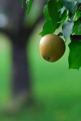 Apfel Baum