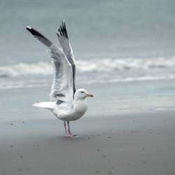 sea gull yoga