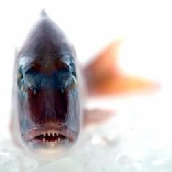 Baby , es gibt Fisch