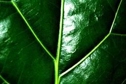 Grüne Phase 2