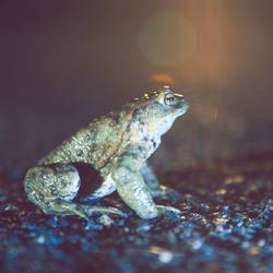 Froschperspektive