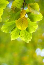 Herbstgrün