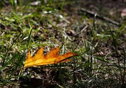 Herbst eben
