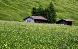 Sommer-Wiesen-Bäume-Hütte