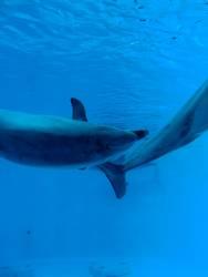 Vor dem Delphin ist nach dem Delphin.