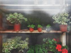 Anonymous Plants