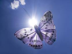 butterfly in the sun
