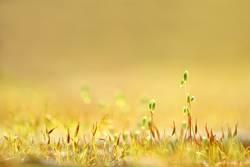 Goldener Frühling