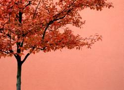 Herbst isochrom