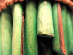Green Wood 1st