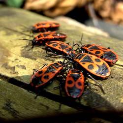 Die Bug-Verschwörung