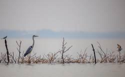 Vogeltreffpunkt in der Lagune von Negombo Sri Lanka