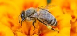 Fleißiges Bienchen II