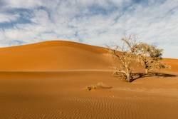 Karge Namib Wüste