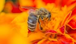 Fleißiges Bienchen III