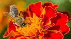 Fleißiges Bienchen IV