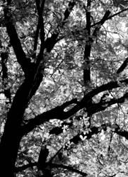 grauer Herbst