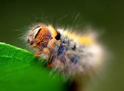 Was für ein Spinner! -- 3