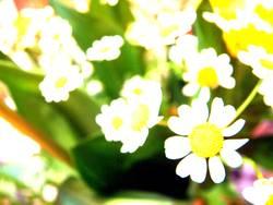 xtrem_flower_crossing