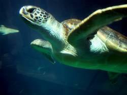 Schwimmkröte