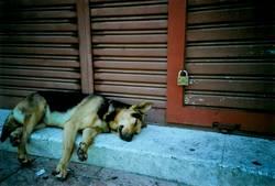 Geschlafen wie ein Hund