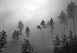 Nebelwand