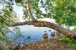 Green tree at river bank