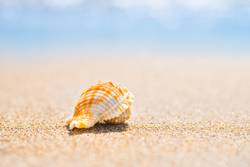 Macro shot of shell at sand beach