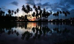 beautiful sunset palm trees reflecting in a pool at beach