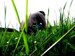 Hocken im Gras