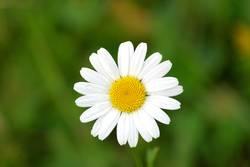 Portrait einer Blume