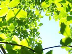 Blätterteig