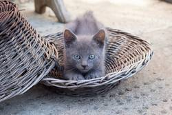 Cute Kitten Stretching in the basket