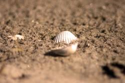 Allein im Sand