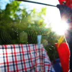 cobweb theorem