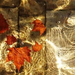 autumn abglanz
