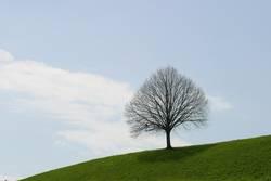 blattloser Baum im Frühling
