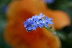 blaublaublau...
