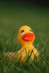 Rubber Ducky, you're the one