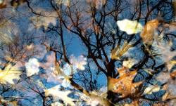 Herbstspiegel II