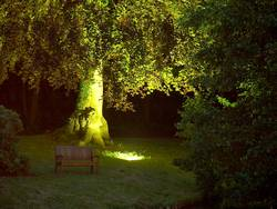 Bank & Baum mit Spotlight