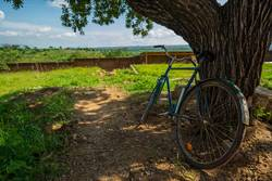 bicycle leans against a tree in malawi