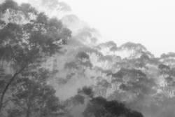Rainforest in fog