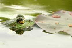 Frosch zieht Flunsch