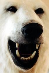 Eisbären müssen nie weinen...