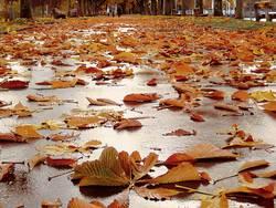 Blätterweg