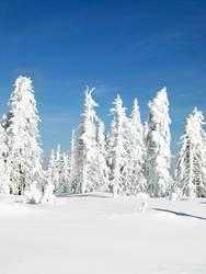 winter hoch 3